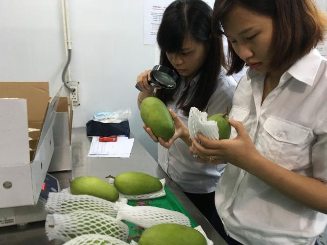 Mỹ chính thức mở cửa cho trái xoài Việt Nam - Ảnh 2.