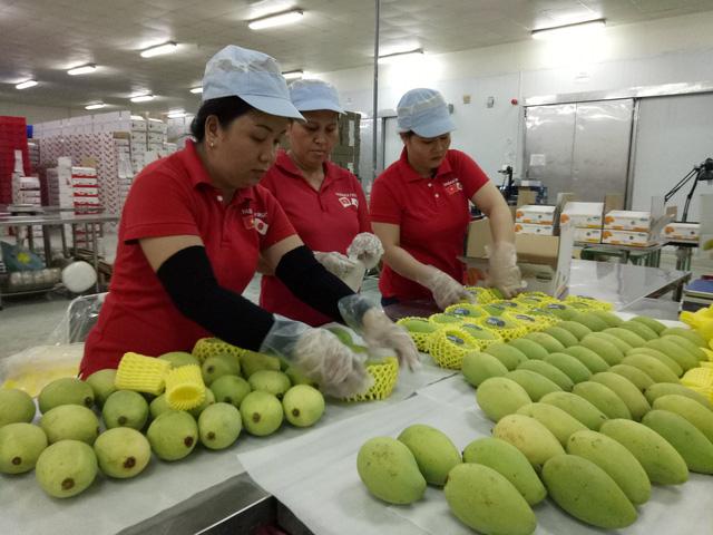 Mỹ chính thức mở cửa cho trái xoài Việt Nam - Ảnh 1.