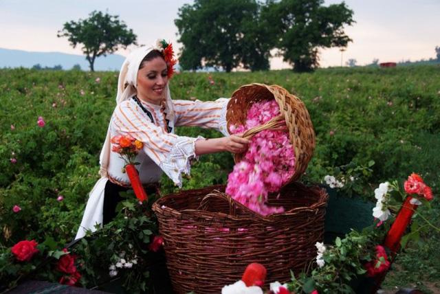 """Ngành """"công nghiệp hoa hồng"""" Bulgaria thu hút nhà đầu tư - Ảnh 1."""
