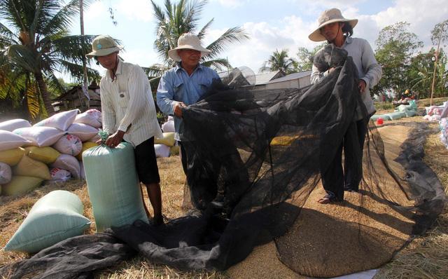 Giá lúa nhích lên, nông dân vẫn khó bán - Ảnh 1.