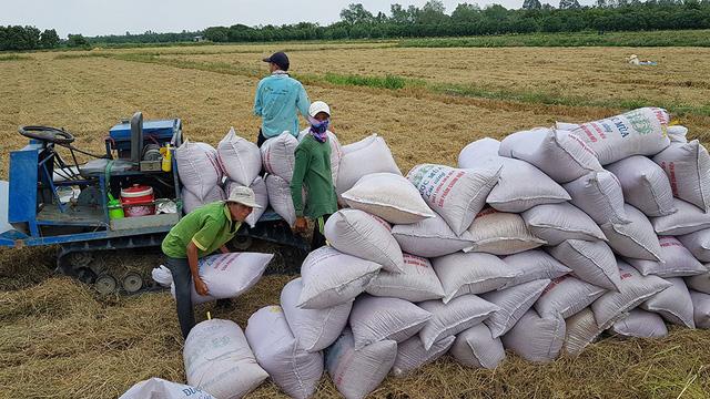 Giảm lãi suất cho vay tiêu thụ lúa xuống mức thấp nhất - Ảnh 1.