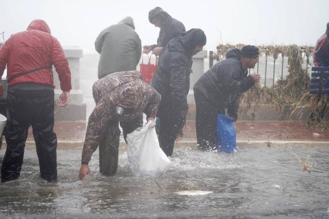 Bất ngờ có mưa cá do sóng lớn, dân Malta trúng mánh - Ảnh 4.