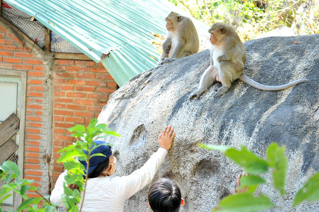 Nhói lòng đường về quê ngày tết với những chú khỉ cụt tay - Ảnh 1.
