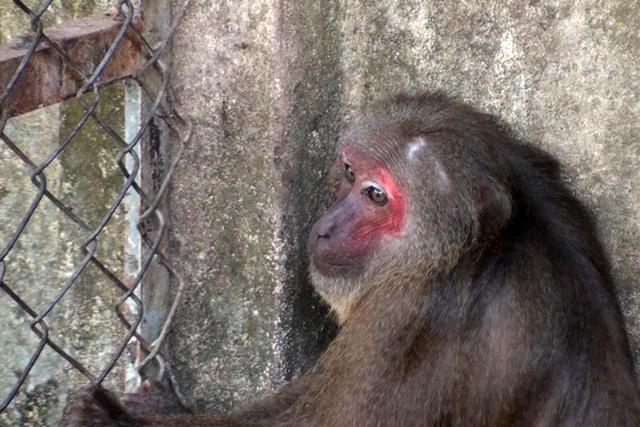 Giao 6 con khỉ quý hiếm cho cơ sở bảo vệ động vật hoang dã - Ảnh 1.