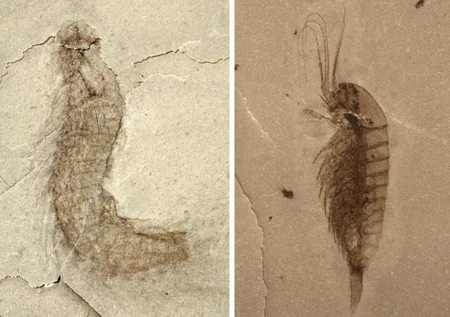 Phát hiện hóa thạch của nhiều loài sinh vật mới - Ảnh 1.