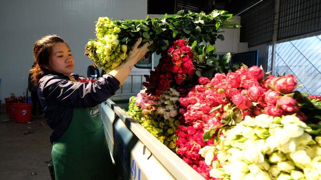 Hoa hồng Đà Lạt tăng giá gấp 16 lần dịp 8-3 - Ảnh 1.