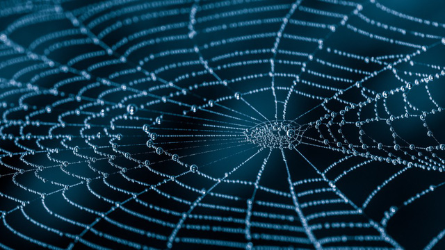 Tơ nhện sẽ được dùng làm vải thông minh, cơ bắp nhân tạo? - Ảnh 1.