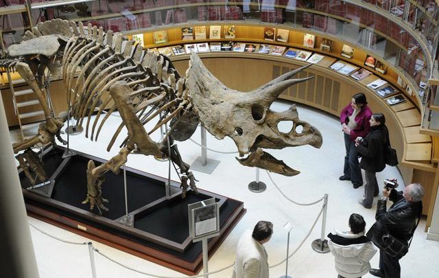 Chuyện gì xảy ra vào ngày khủng long tuyệt chủng? - Ảnh 1.
