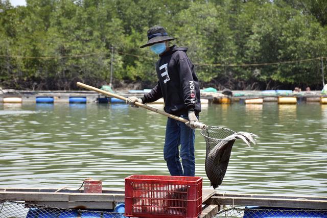 Hàng chục tấn cá bè Long Sơn chết - Ảnh 1.