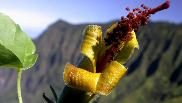 Loài hoa đã tuyệt chủng được phát hiện đầy bất ngờ - Ảnh 1.