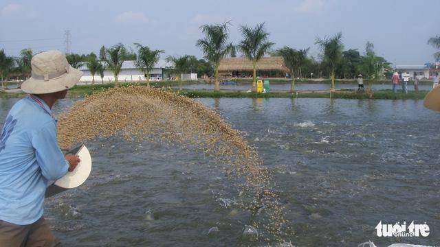 Mỹ áp thuế cao với cá tra Việt Nam - Ảnh 2.