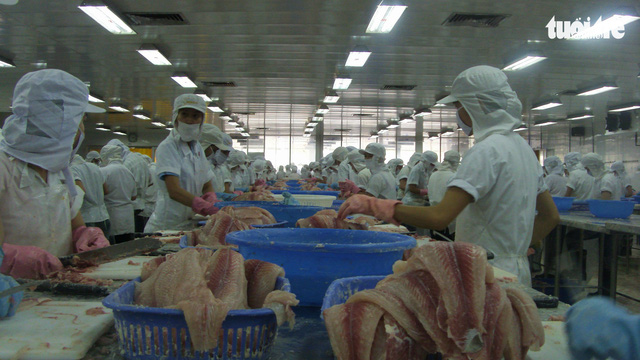 Mỹ áp thuế cao với cá tra Việt Nam - Ảnh 1.