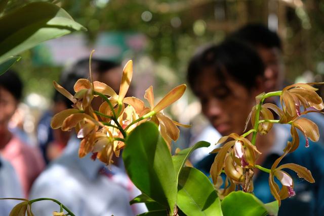 Lan khoe sắc quý phái ở Nha Trang - Ảnh 15.