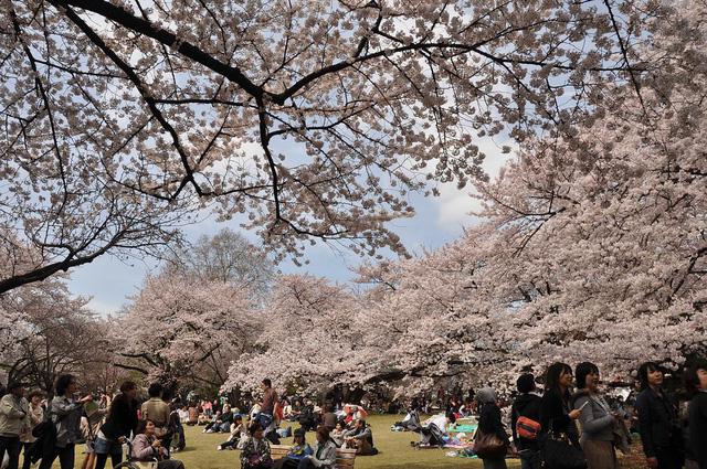 Cách Nhật Bản thu hút chi tiêu của khách du lịch - Ảnh 1.
