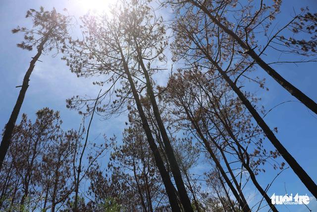 Đừng đổ cho địa bàn rộng rồi để mất rừng - Ảnh 2.