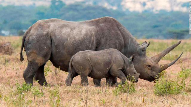 Sắp phát hành trái phiếu bảo vệ động vật đầu tiên trên thế giới - Ảnh 1.