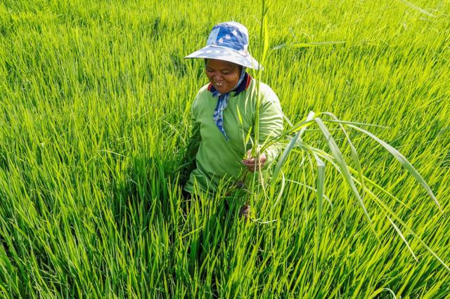 Hạn hán nghiêm trọng sẽ đẩy giá nông sản tăng cao tại Thái Lan - Ảnh 1.
