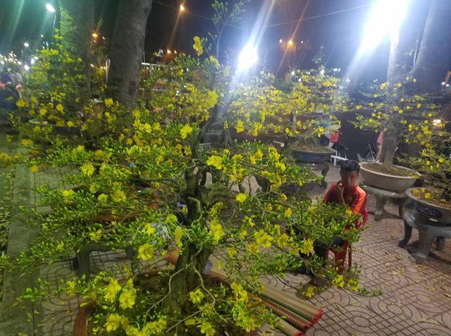 Cúc, quất... giá giảm hơn một nửa, dân Sài Gòn đổ xô đi mua - Ảnh 9.