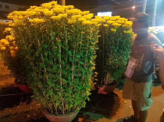 Cúc, quất... giá giảm hơn một nửa, dân Sài Gòn đổ xô đi mua - Ảnh 4.