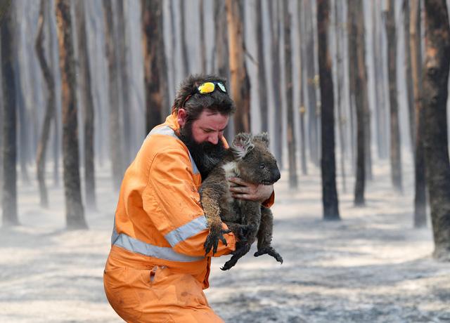 Đảo Kangaroo của Úc cháy ngoài tầm kiểm soát, chính quyền kêu gọi di tản - Ảnh 6.