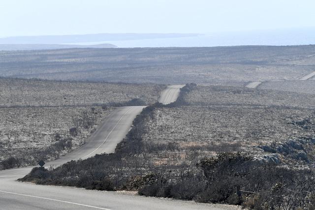 Đảo Kangaroo của Úc cháy ngoài tầm kiểm soát, chính quyền kêu gọi di tản - Ảnh 4.