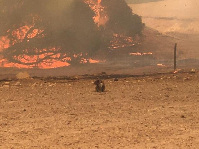 Đảo Kangaroo của Úc cháy ngoài tầm kiểm soát, chính quyền kêu gọi di tản - Ảnh 3.
