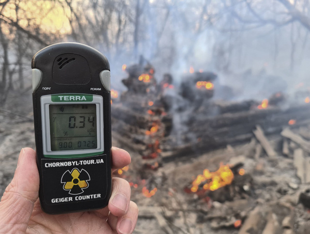 Lượng phóng xạ tại lò phản ứng hạt nhân Chernobyl gây hại cho loài ong - Ảnh 1.