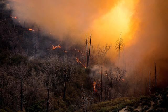4 triệu hecta rừng bị thiêu rụi ở California, gấp đôi kỷ lục năm 2018 - Ảnh 2.