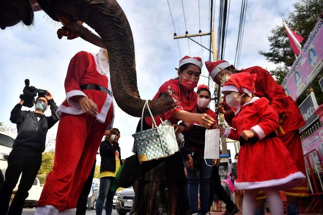 Ông già Noel cưỡi voi phát khẩu trang - Ảnh 1.