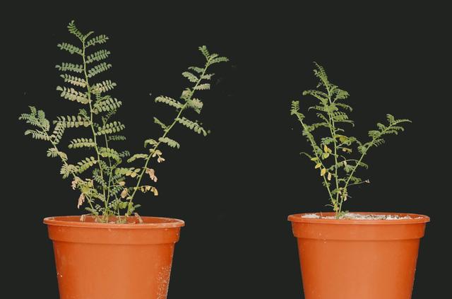 Phát hiện thực vật hấp thụ dưỡng chất từ bụi trong không khí - Ảnh 1.