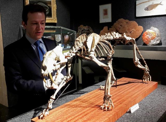 Bán đấu giá bộ xương hổ răng kiếm hóa thạch gần 40 triệu năm tuổi - Ảnh 1.