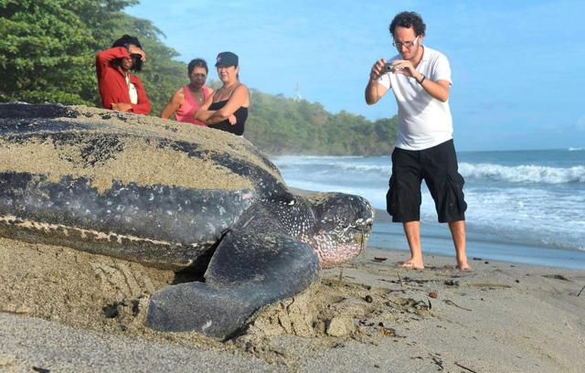 Tìm thấy một tổ rùa da quý hiếm tại Ecuador - Ảnh 1.