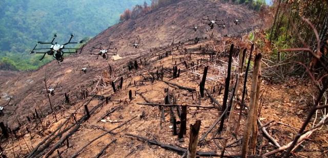 Máy bay không người lái rải hạt giống, trồng lại rừng bị cháy - Ảnh 1.