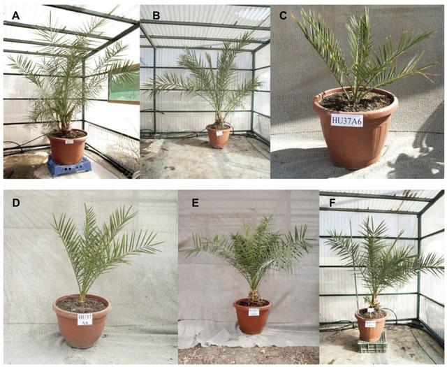 Hạt giống 2.000 năm tuổi vẫn nảy mầm thành cây - Ảnh 1.