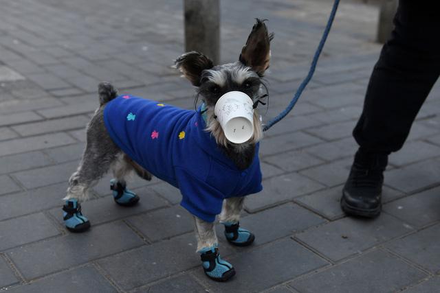 Hong Kong ghi nhận thêm một chú chó mắc bệnh COVID-19 - Ảnh 1.