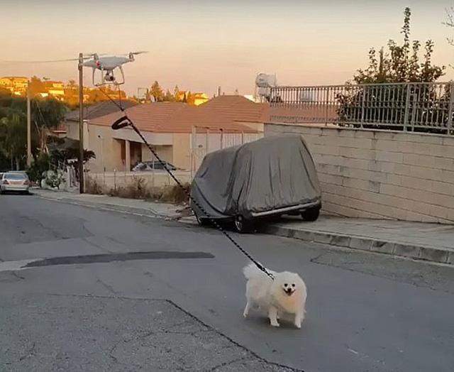 Dùng drone dắt chó đi dạo - Ảnh 1.