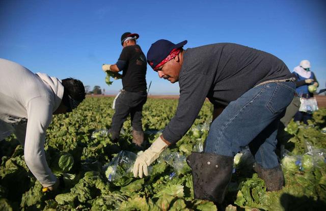 Châu Âu khan hiếm lao động nước ngoài làm việc theo thời vụ - Ảnh 1.