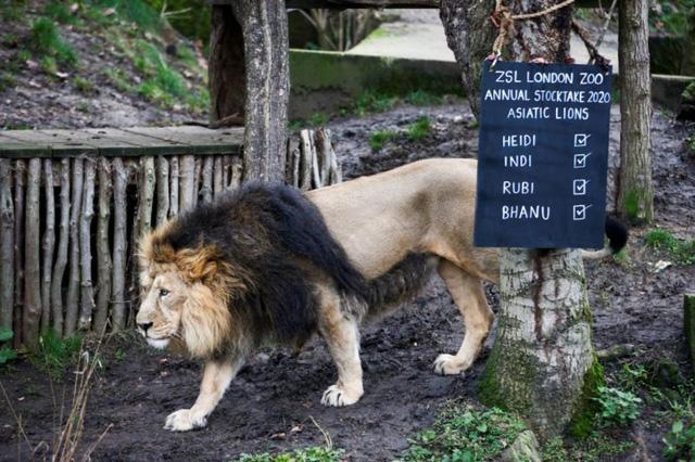 Đóng cửa vì COVID-19, sở thú London chật vật chăm sóc 18.000 động vật - Ảnh 1.