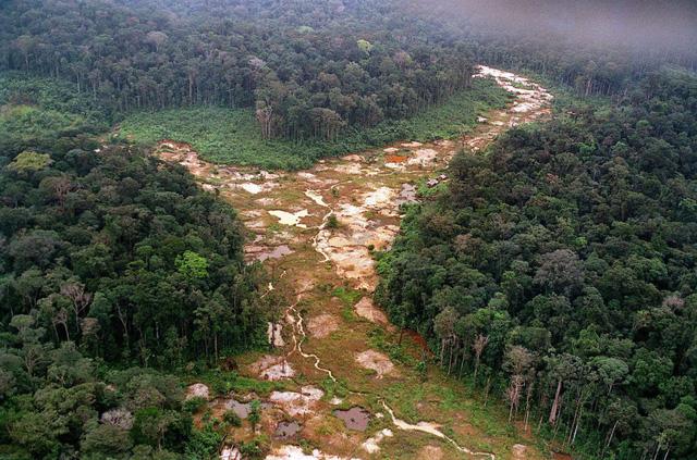Rừng Amazon tiếp tục bị tàn phá nghiêm trọng - Ảnh 1.