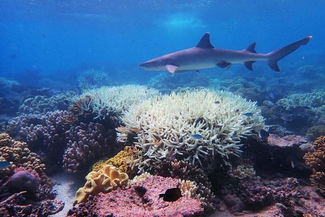 Làm sáng mây để cứu quần thể san hô Great Barrier - Ảnh 1.