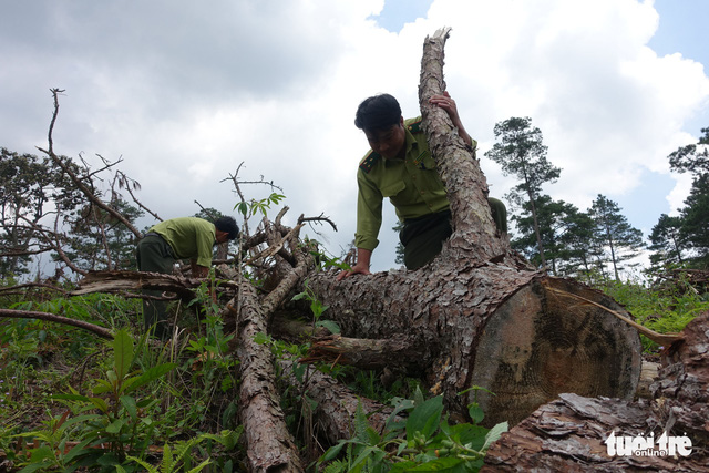 Mất 75 hecta rừng tự nhiên, nguyên giám đốc sở nông nghiệp bị khởi tố - Ảnh 1.