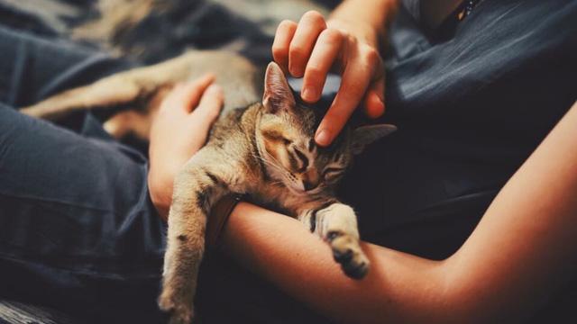 Cảnh báo nguy cơ lây nhiễm virus SARS-CoV-2 giữa mèo với mèo - Ảnh 1.