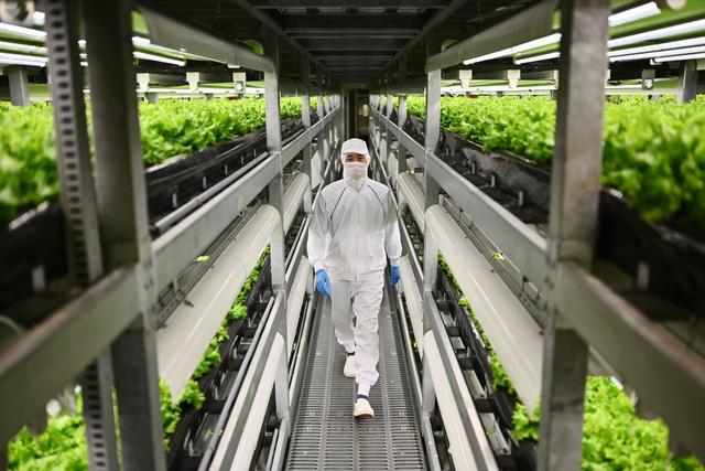 Dịch COVID-19 gây thiệt hại nặng nề cho ngành nông nghiệp ở nhiều nước - Ảnh 1.