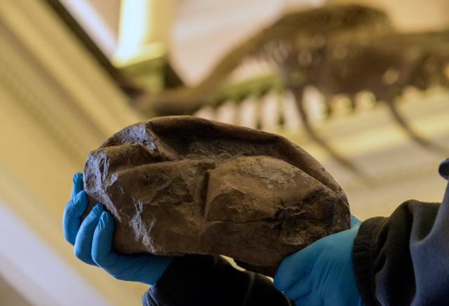 Phát hiện hóa thạch quả trứng thằn lằn lớn nhất trong thời đại khủng long - Ảnh 1.