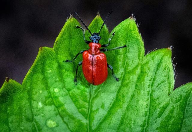 Thực vật có khả năng ngụy trang mùi hương để sinh tồn - Ảnh 1.