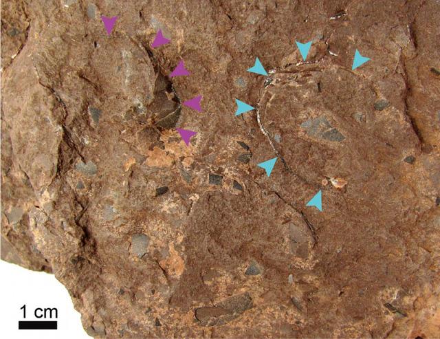 Phát hiện hóa thạch trứng khủng long nhỏ nhất thế giới - Ảnh 1.