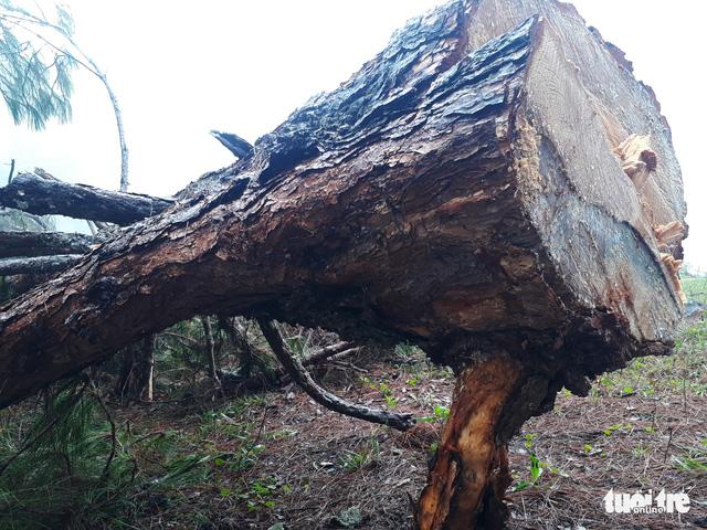 Khởi tố vụ án phá rừng trong danh thắng Langbiang - Ảnh 1.