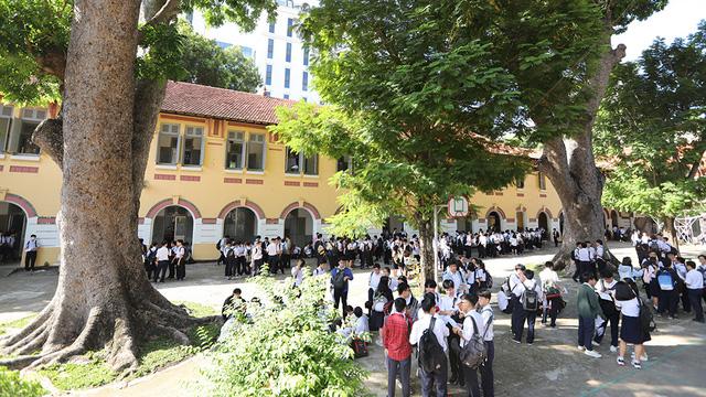 Chặt tỉa cây xanh phải tốn 237 triệu, trường học ở TP.HCM sốc - Ảnh 1.