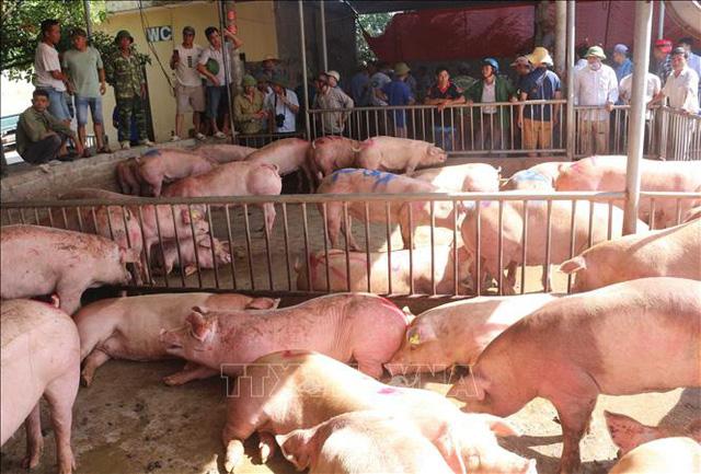 Người chăn nuôi Thái Lan đồng ý xóa khâu trung gian để hạ giá thịt lợn - Ảnh 1.
