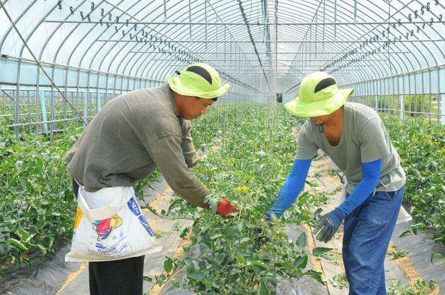 Hàn Quốc tìm cách gia hạn thị thực cho lao động nước ngoài - Ảnh 1.